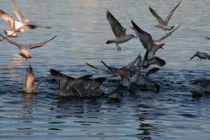 Seagulls by o0o0xmods0o0o