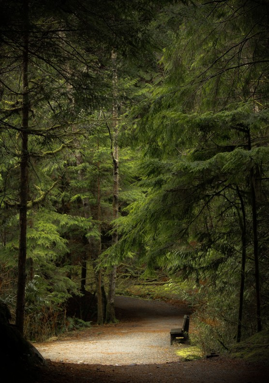 forest 26 Twila Savigny