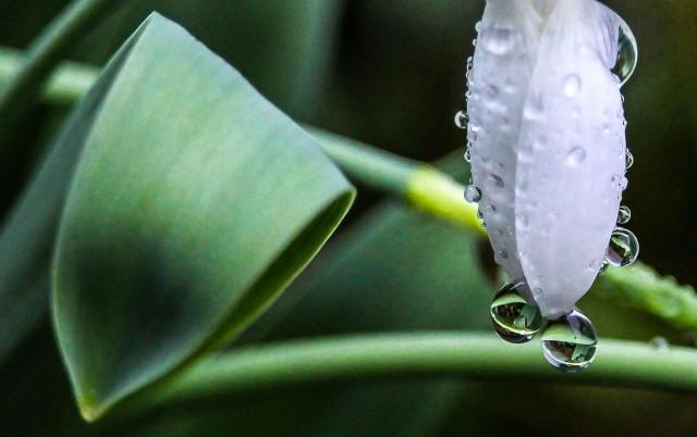Rain drop #6 twila Savigny