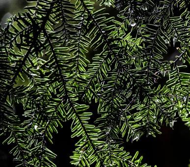 Texture 2 Tila Savigny