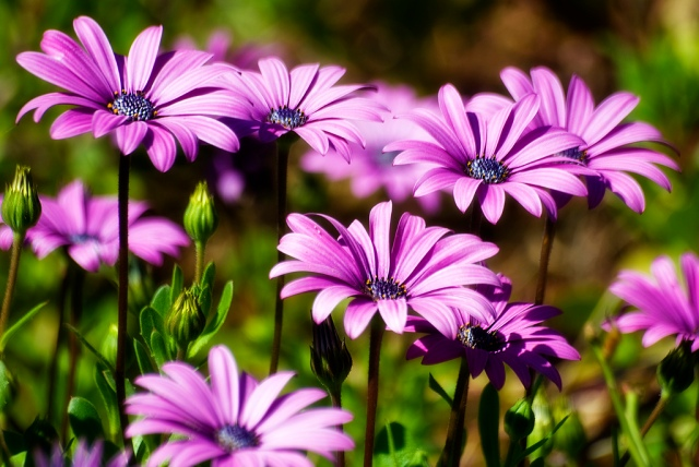 Flowers by Riccardo Cuppini