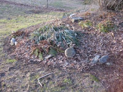 Dormant fern garden by Jay Pastore