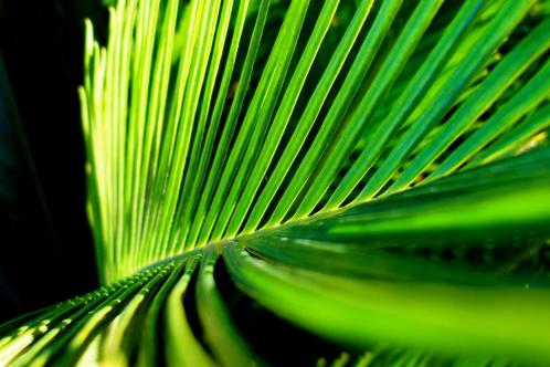 palm frond by Samuel John