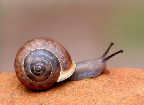 A Snail's Pace by Ken Slade