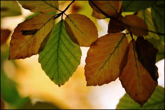 leaves by Paul