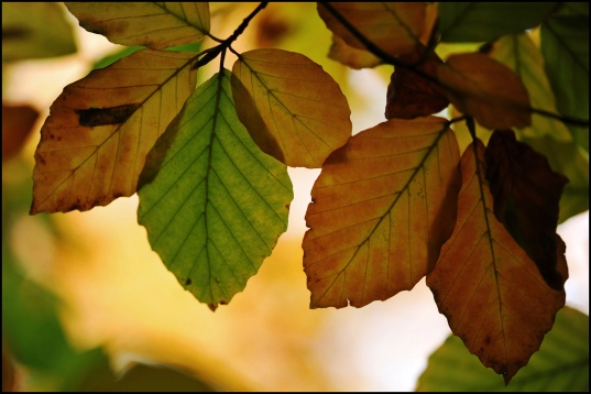 leaves by Paul