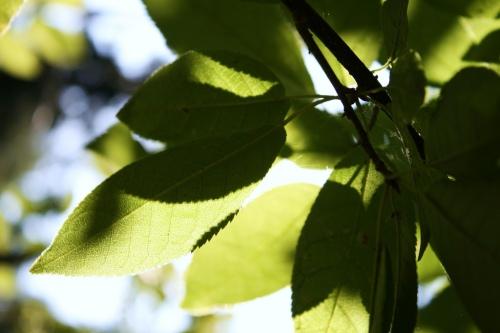 Peace in a leaf by Tenacity8fear