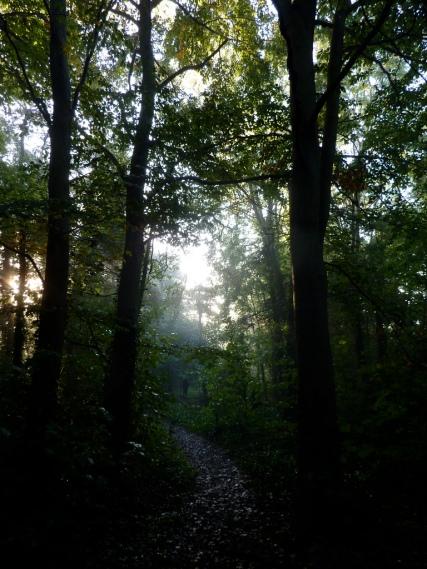 dark Autumn woods Christian Guthier