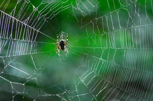 Spider Web by E.P.Ewing