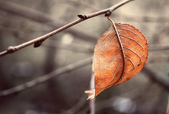 leaf cropped