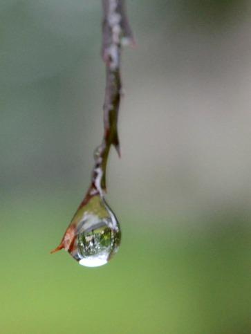 Raindrip slgckgc