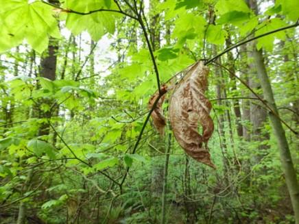 leaf 1 by Gail Purdy