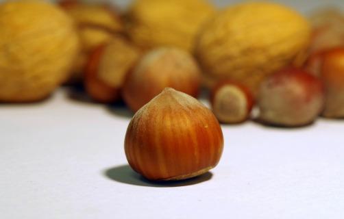 walnut-1776468_1280